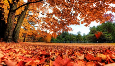 Landscapes nature autumn (season) leaves HD wallpaper