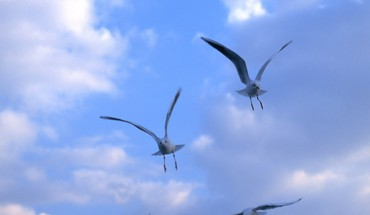 Blue animals skies birds HD wallpaper