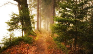 Landscapes nature trees foggy forest path HD wallpaper
