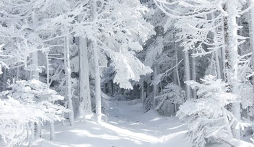 Forests snow landscapes trees HD wallpaper
