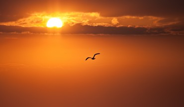 Birds clouds nature silhouettes skyscapes HD wallpaper