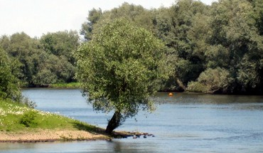 Tree by the river HD wallpaper