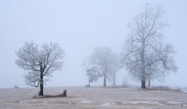 Winter trees cold fog frost gray hair hoarfrost HD wallpaper