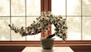 Flowers bonsai culture HD wallpaper