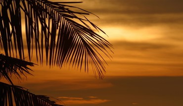 Palm leaves sunset trees tropical HD wallpaper
