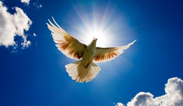 Dove bird sky HD wallpaper