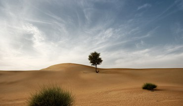 Desert bushes sunny HD wallpaper
