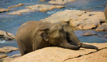 Animals baby elephant elephants wildlife HD wallpaper