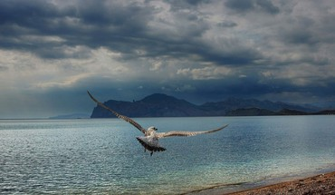 Birds clouds mountains nature waterscapes HD wallpaper