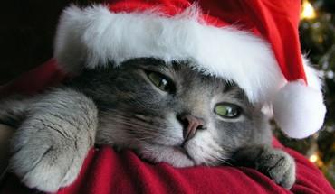 Cats christmas HD wallpaper