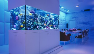 Aquarium fish tank interior tables HD wallpaper