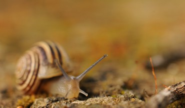 Animals molluscs snails HD wallpaper