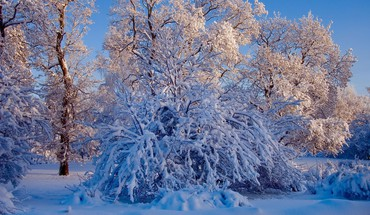 Winter snow trees landscapes HD wallpaper
