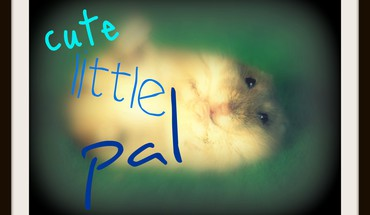 Cute little pal HD wallpaper
