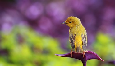 Little bird on flower HD wallpaper