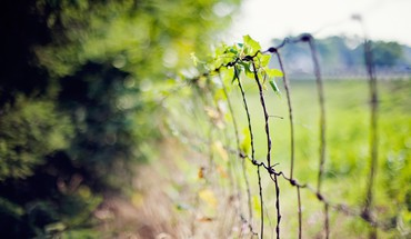 Nature fences bokeh depth of field wires HD wallpaper