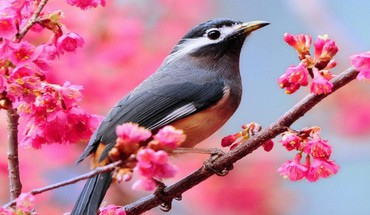 Bird on blooming tree HD wallpaper
