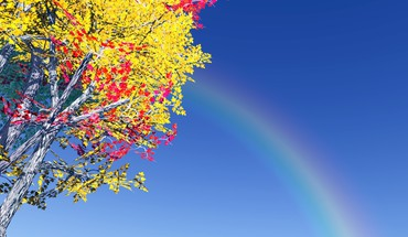 Colorful tree and rainbow HD wallpaper