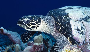 Nature animals sealife HD wallpaper