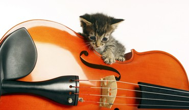 Music animals instruments kittens HD wallpaper