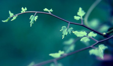 Nature leaves branches HD wallpaper
