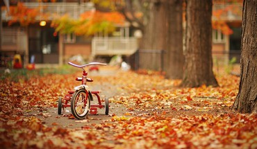 Automne  HD wallpaper