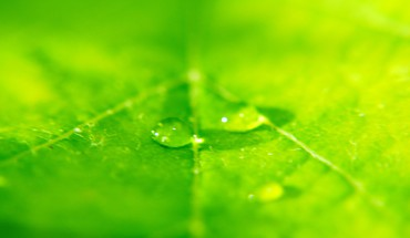 Green leaf desktop background HD wallpaper
