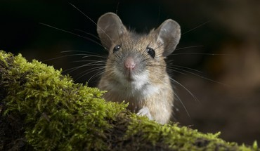 Animals mice nature outdoors HD wallpaper