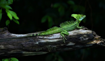 Animals branches green lizards nature HD wallpaper