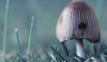 Fungus macro mushrooms HD wallpaper