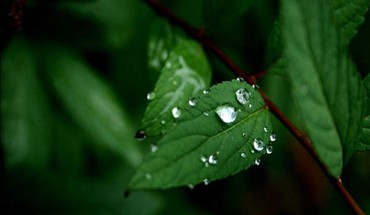 Nature leaves water drops HD wallpaper