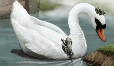 Swan and frogs HD wallpaper