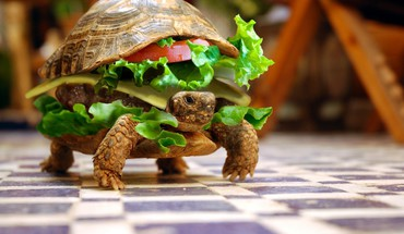 Funny hamburgers photo manipulation turtles HD wallpaper