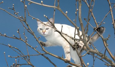 White cat in a tree HD wallpaper