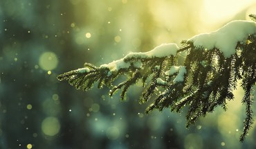 Nature pine trees snow HD wallpaper