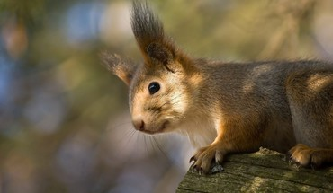 Animals mammals squirrels HD wallpaper