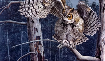 Forest owl HD wallpaper