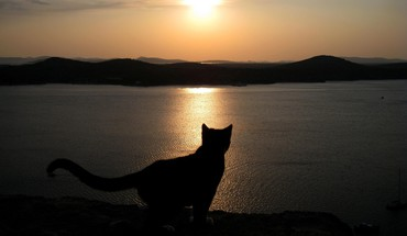 Animals cats sea sunset HD wallpaper