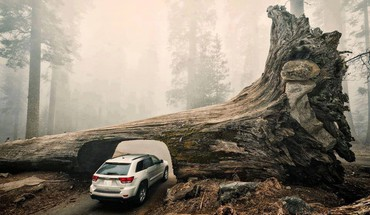 Jeep cars nature trees vehicles HD wallpaper