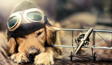 Aircraft animals dogs carriers airplane prop engine HD wallpaper
