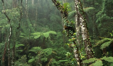 Damp misty rainforest HD wallpaper
