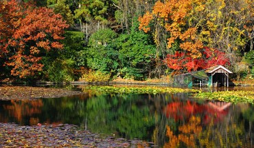 Love eau japon nature automne  HD wallpaper