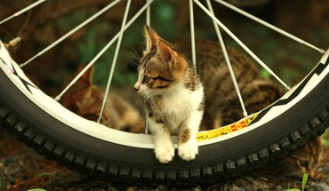 Animaux vélos chats motos Animaux  HD wallpaper