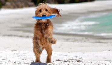 Playing dog HD wallpaper
