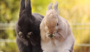 Animals bunnies HD wallpaper