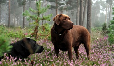Forest animals dogs HD wallpaper