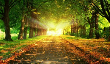 Light sun trees parks colors HD wallpaper