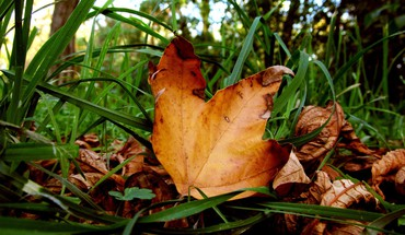 Leaves grass HD wallpaper