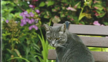Tabby chat assis sur un banc  HD wallpaper
