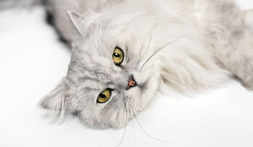 Cats yellow eyes HD wallpaper